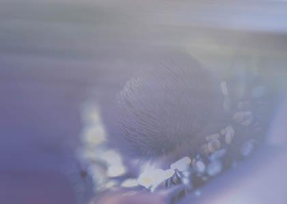 Anemone-Postkarte_246t