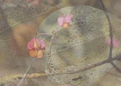 Pfaffenhuetchen-Lampionblume-Postkarte_250t