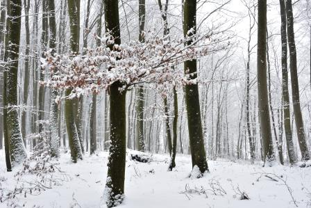 Winterwald-Postkarte_282