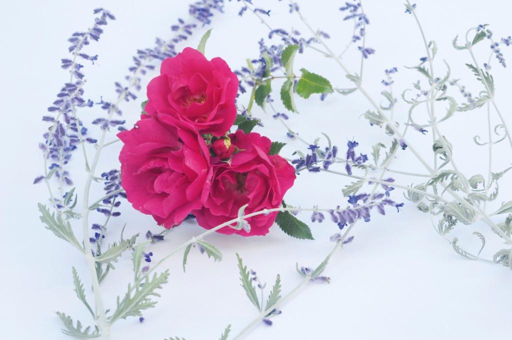 Rose-Lavendel-Postkarte_316